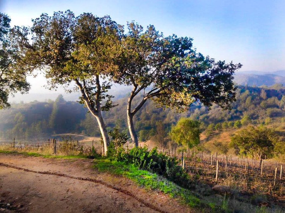 Beautiful dirt road vineyard shot