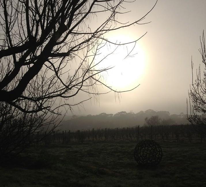 Farr Sunrise