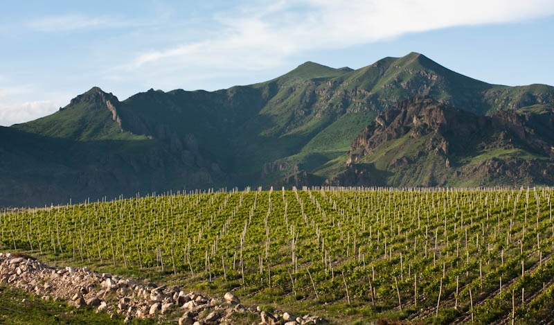zorah vineyard